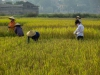indochina-10-30-okt-2012-399